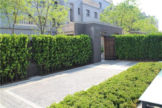 设计图分享 家庭院子鱼池设计图 > 院子花台设计图片  院子花台设计