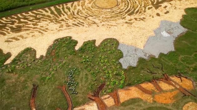 """2英亩的梵高名画""""橄榄树""""."""