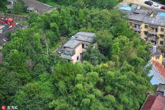 别墅周边竹林环绕