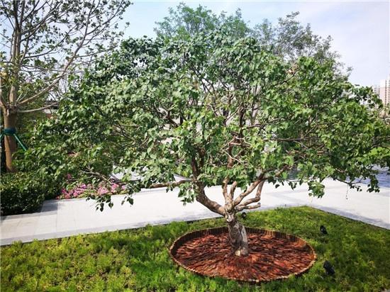 购房 楼盘快讯  生态景观上设计的第三景只甄选适宜北方生长的树种